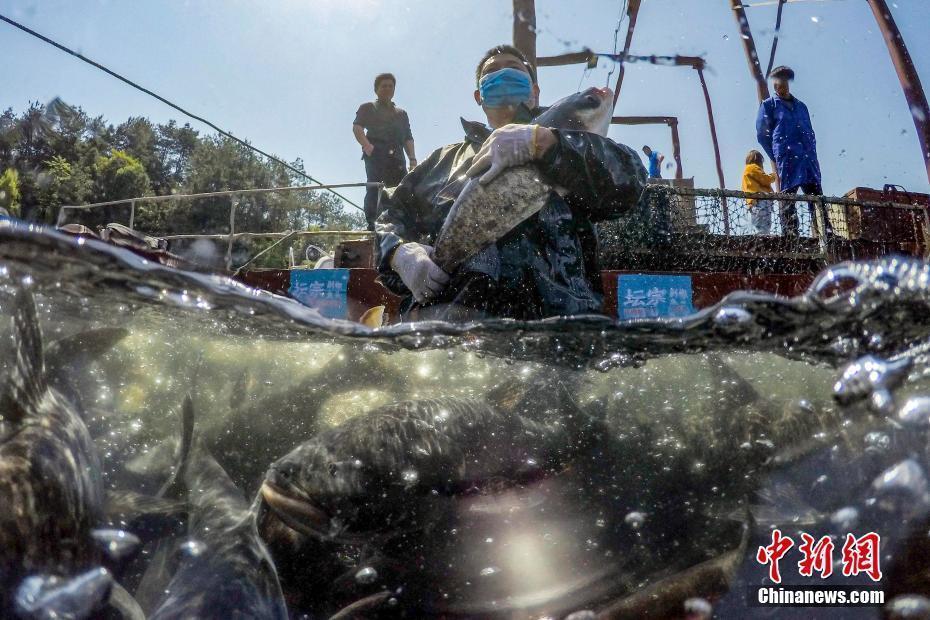 湖南岳阳渔民喜获丰收